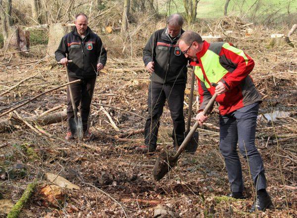 Landesverband Lippe hat Millionsten Baum auf einer Schadfläche gepflanzt